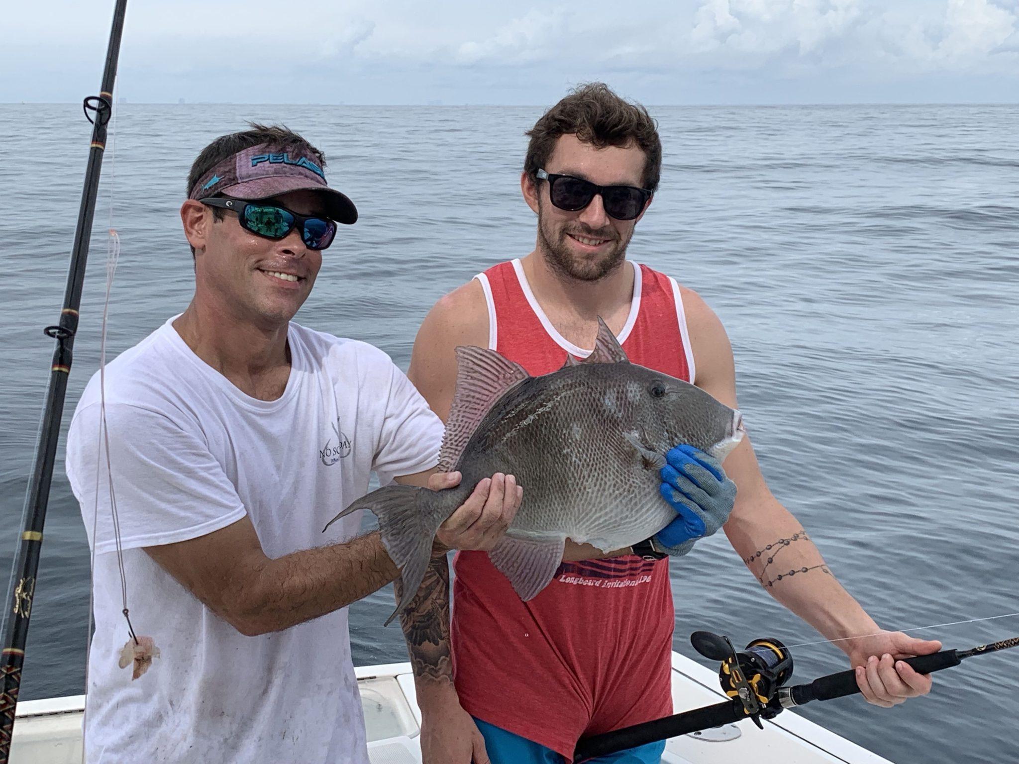 triggerfish off Orange Beach Alabama
